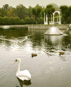 Joutsenlampi Kadriorgin puisto Tallinna