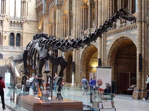 Natural History Museum Lontoo Diplodocus dinosaurus