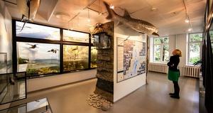 Toinen kerros Viron luonnontieteellinen museo Tallinna