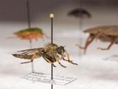 Viron luonnontieteellinen museo - Hyönteistieteen kokoelmat
