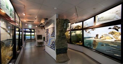 Viron luonnontieteellinen museo toinen kerros Tallinna