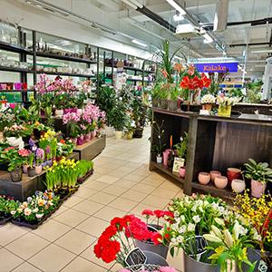 Lillede Villa Tallinna
