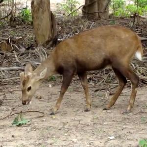 Hua Hinin eläinpuisto Thaimaa