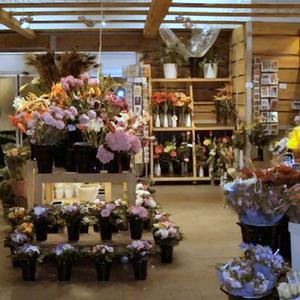 Kaivokukka kukkakauppa Kauppakeskus Kamppi Helsinki